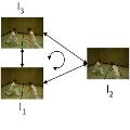 A Loop-Consistency Measure for Dense Correspondences in Multi-View Video